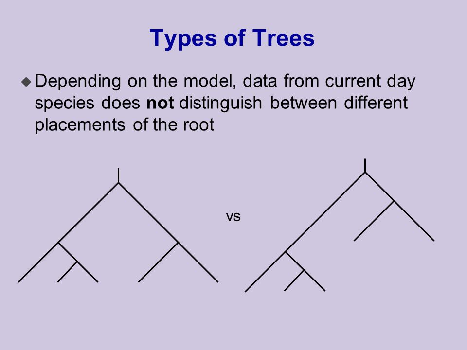 Types of Trees u Depending on the model, data from current day species does not distinguish between different placements of the root vs