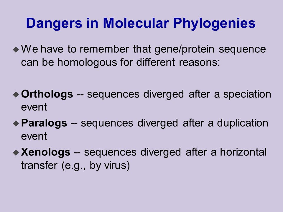 Dangers in Molecular Phylogenies u We have to remember that gene/protein sequence can be homologous for different reasons: u Orthologs -- sequences diverged after a speciation event u Paralogs -- sequences diverged after a duplication event u Xenologs -- sequences diverged after a horizontal transfer (e.g., by virus)
