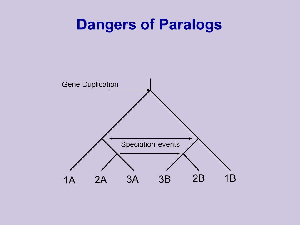 Dangers of Paralogs Speciation events Gene Duplication 1A 2A 3A3B 2B1B
