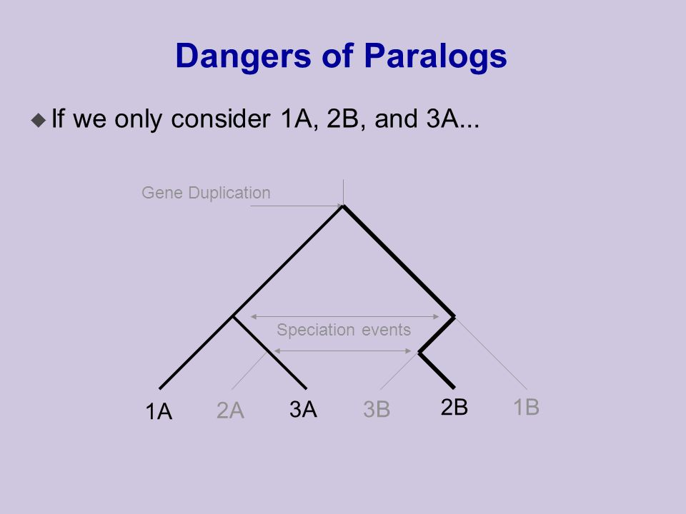 Dangers of Paralogs Speciation events Gene Duplication 1A 2A 3A3B 2B1B u If we only consider 1A, 2B, and 3A...
