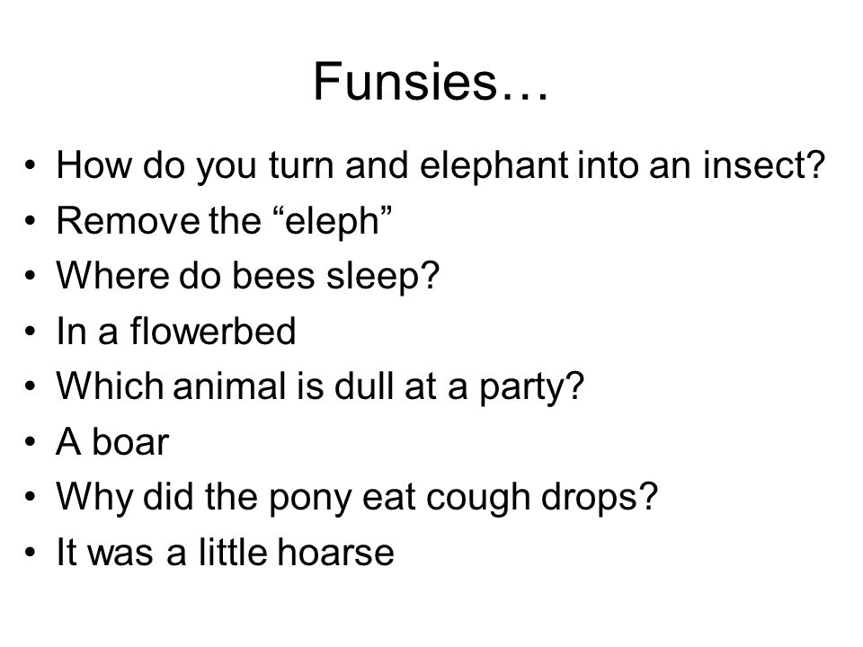 Funsies… How do you turn and elephant into an insect.