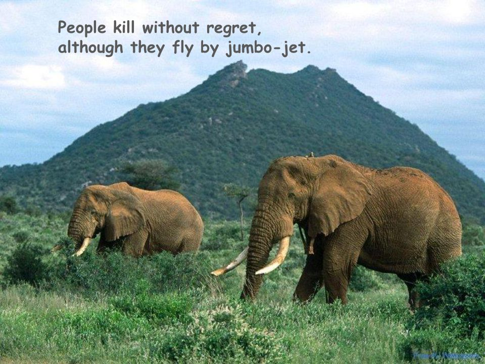 2-5-2015 People kill without regret, although they fly by jumbo-jet.