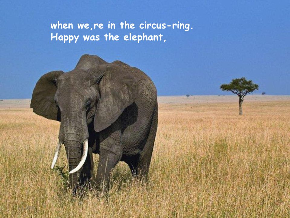 2-5-2015 when we,re in the circus-ring. Happy was the elephant,