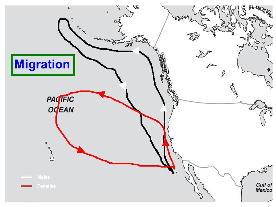 (C) 2008 California State Parks 24 Males Females Migration