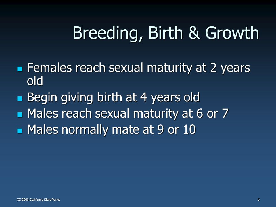 (C) 2008 California State Parks 5 Breeding, Birth & Growth Females reach sexual maturity at 2 years old Females reach sexual maturity at 2 years old B