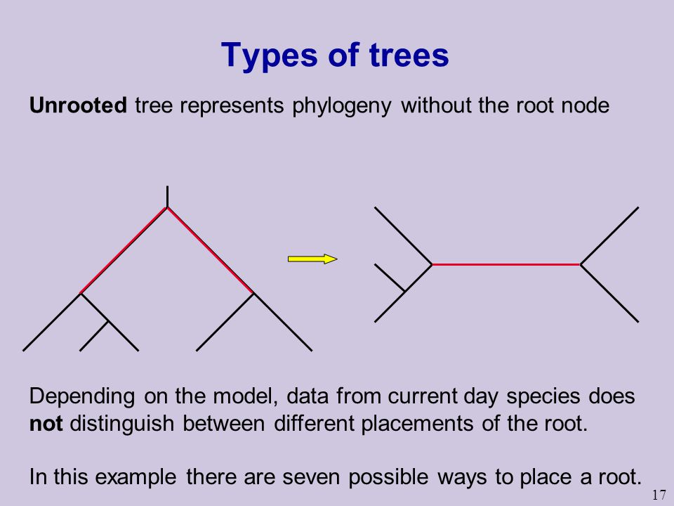 17 Types of trees Unrooted tree represents phylogeny without the root node Depending on the model, data from current day species does not distinguish between different placements of the root.