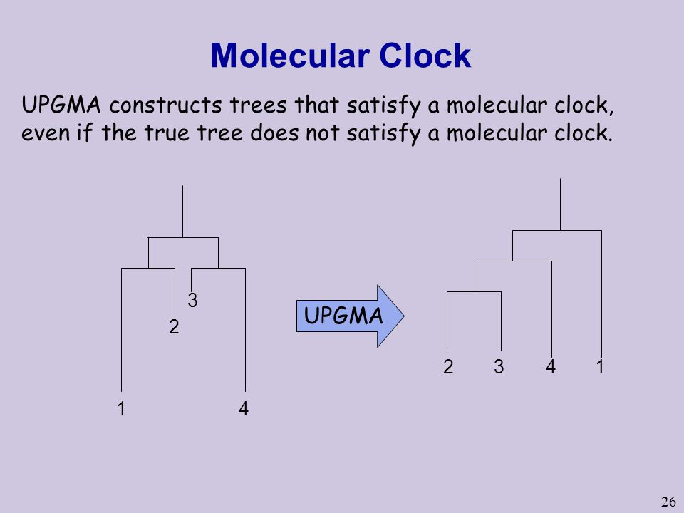 26 Molecular Clock 1 2 3 4 UPGMA 2341 UPGMA constructs trees that satisfy a molecular clock, even if the true tree does not satisfy a molecular clock.
