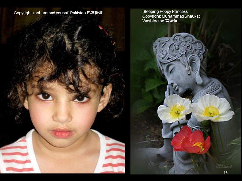 Copyright: mohammad yousaf Pakistan 巴基斯坦 Sleeping Poppy Princess Copyright: Muhammad Shaukat Washington 華盛頓 15
