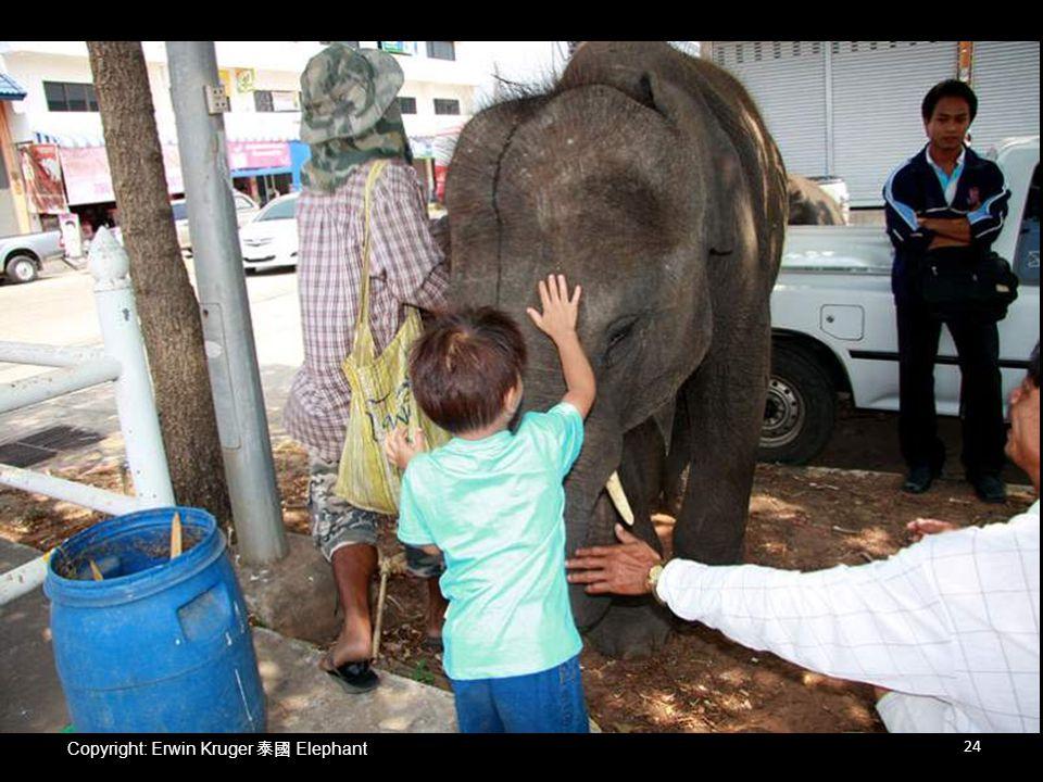 Copyright: Erwin Kruger 泰國 Elephant 24