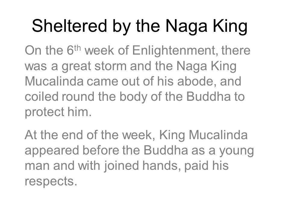 Sheltered by the Naga King On the 6 th week of Enlightenment, there was a great storm and the Naga King Mucalinda came out of his abode, and coiled ro