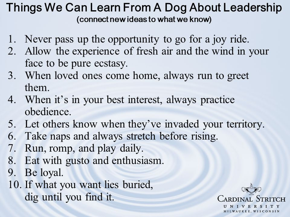 Things We Can Learn From A Dog About Leadership (connect new ideas to what we know) 1.Never pass up the opportunity to go for a joy ride.
