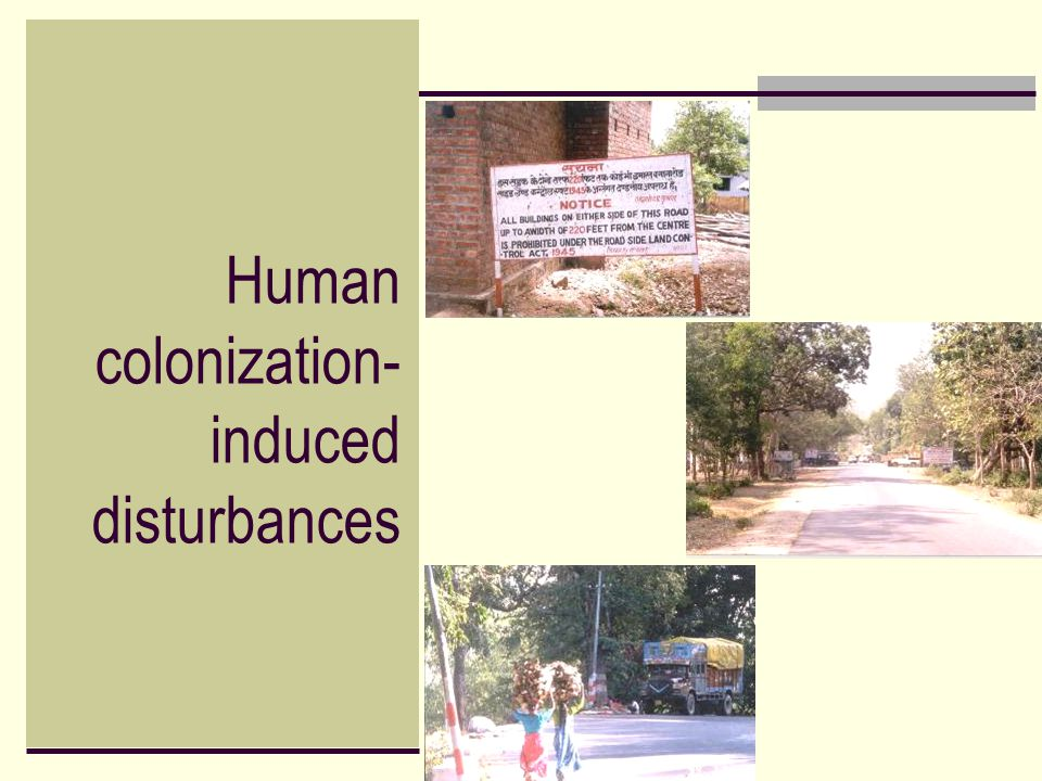 Human colonization- induced disturbances