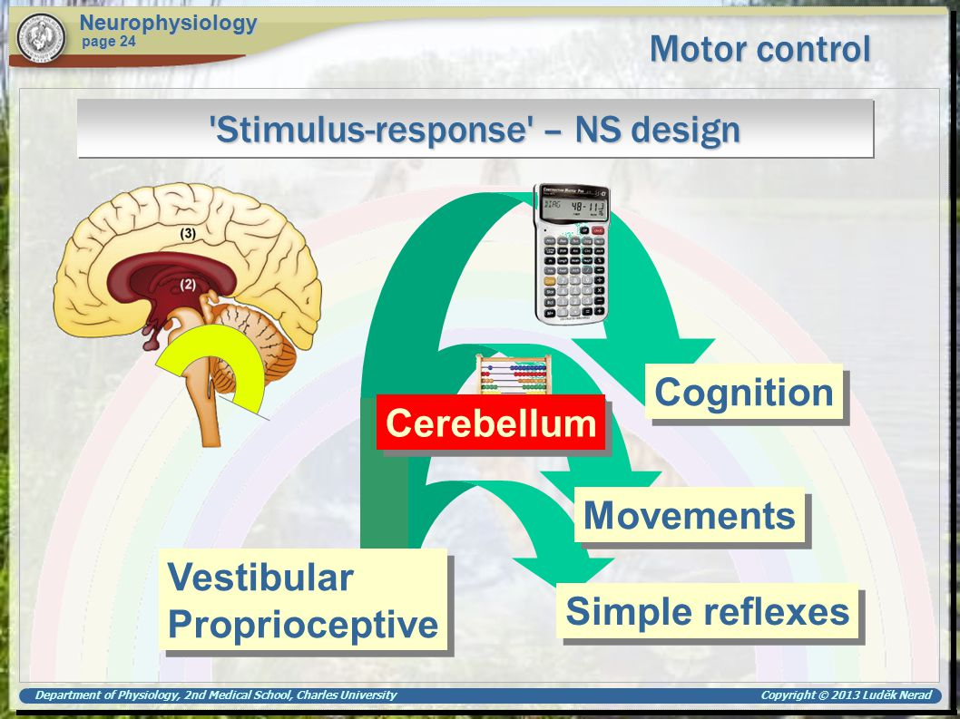 Department of Physiology, 2nd Medical School, Charles University Copyright © 2013 Luděk Nerad Motor control Neurophysiology page 24 'Stimulus-response