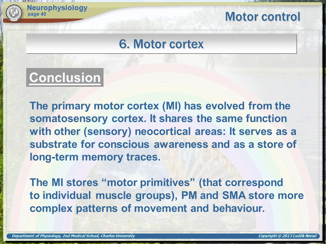 Department of Physiology, 2nd Medical School, Charles University Copyright © 2013 Luděk Nerad Motor control Neurophysiology page 40 6. Motor cortex Co
