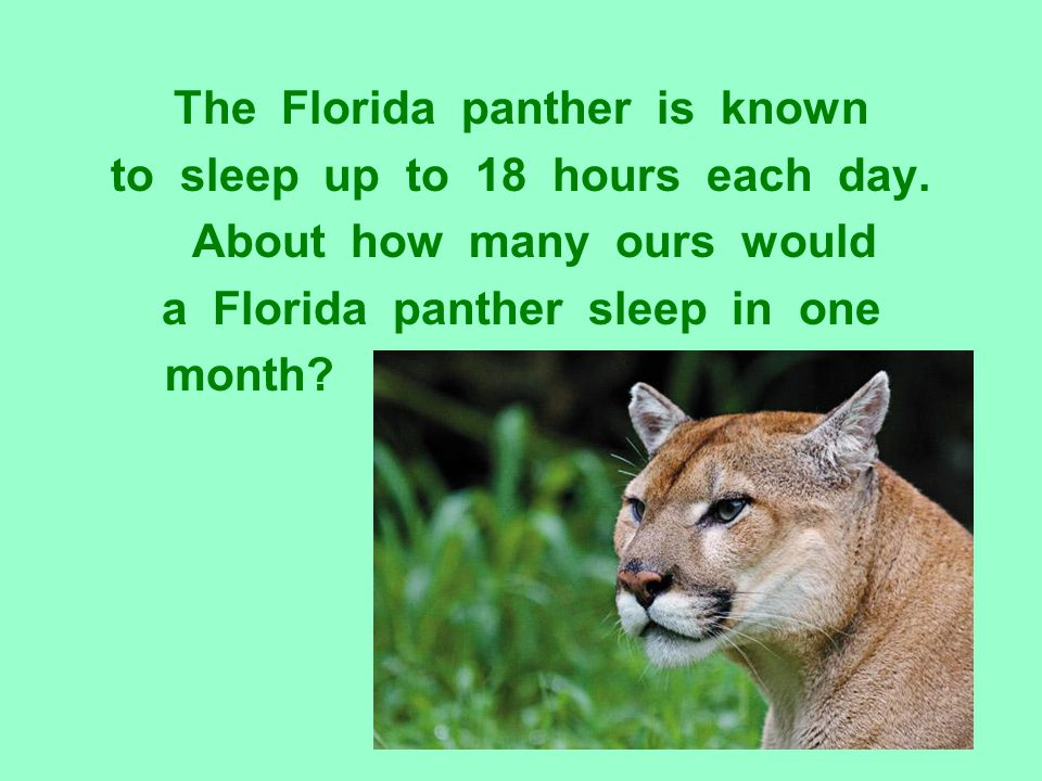 The Florida panther is known to sleep up to 18 hours each day. About how many ours would a Florida panther sleep in one month?