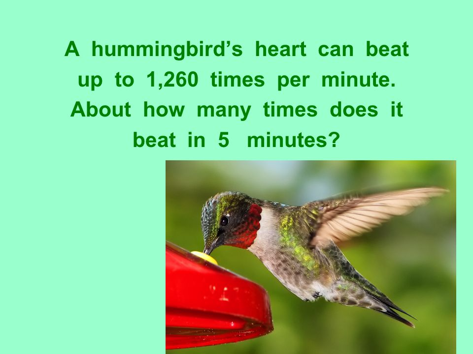 A hummingbird's heart can beat up to 1,260 times per minute. About how many times does it beat in 5 minutes?