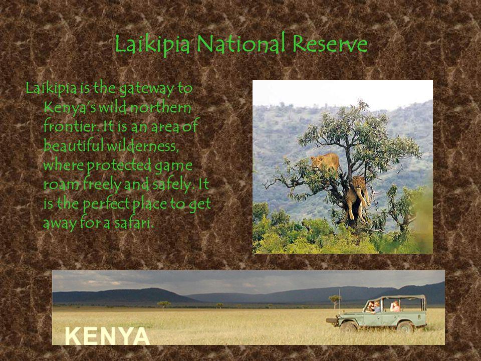 Maasai Mara Wildlife