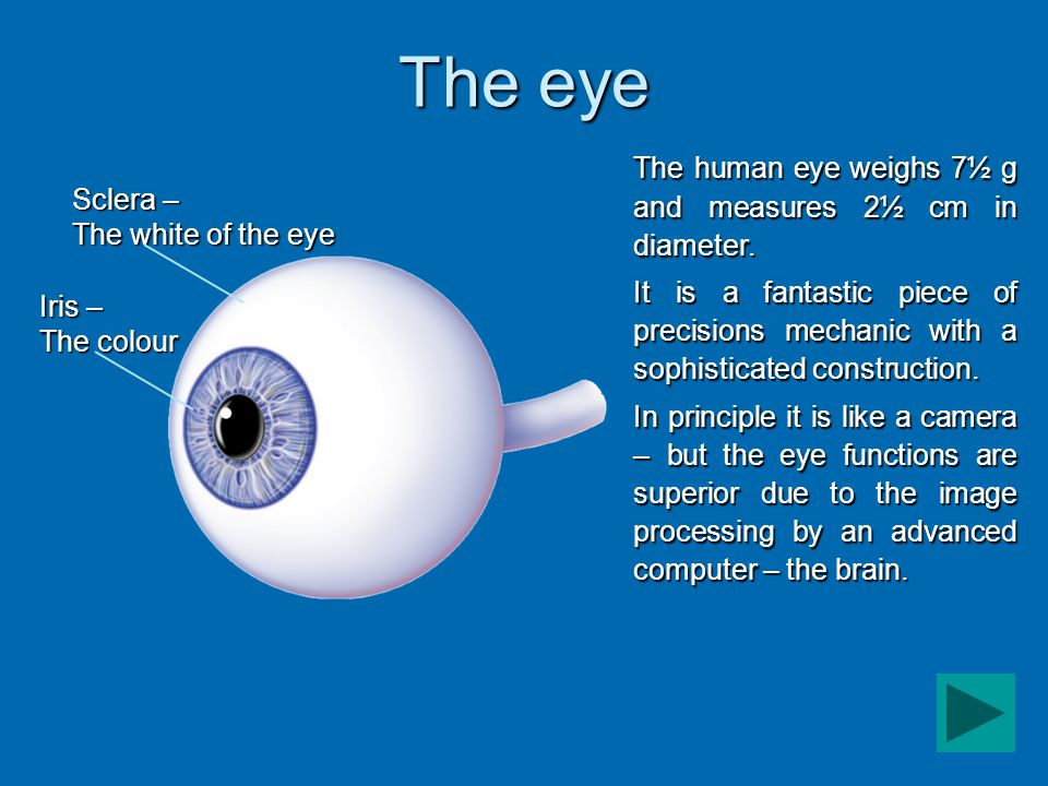 The lens Fovea – the yellow spot The blind spot – optic nerve head The human eye is complex – it is composed of many fine layers and areas with specialized functions.