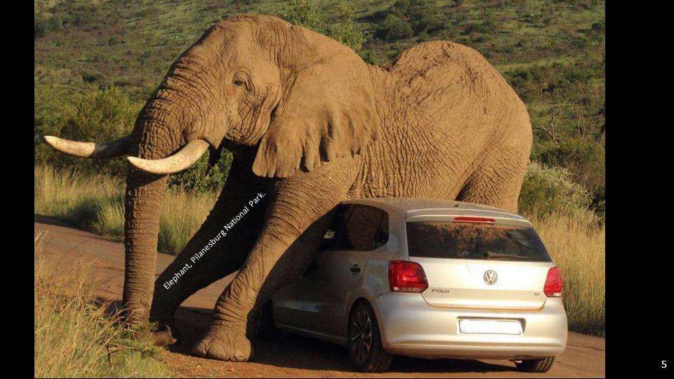 Elephant, Pilanesburg National Park. 4
