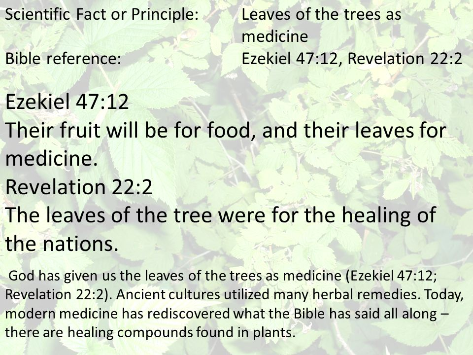 Scientific Fact or Principle:Leaves of the trees as medicine Bible reference:Ezekiel 47:12, Revelation 22:2 God has given us the leaves of the trees a