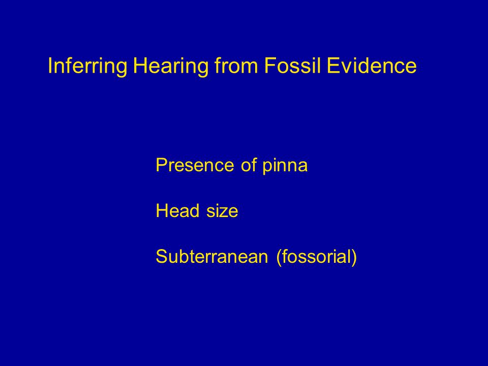 Inferring Hearing from Fossil Evidence Presence of pinna Head size Subterranean (fossorial)