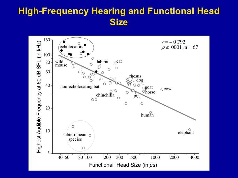 High-Frequency Hearing and Functional Head Size