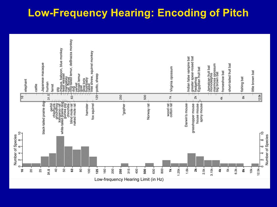 Low-Frequency Hearing: Encoding of Pitch