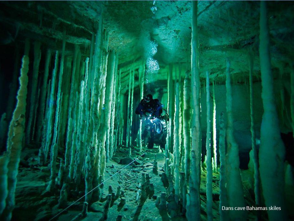 Dans cave Bahamas skiles