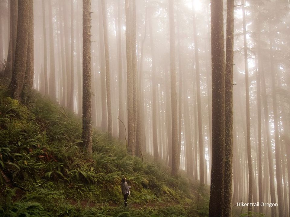 Hiker trail Oregon