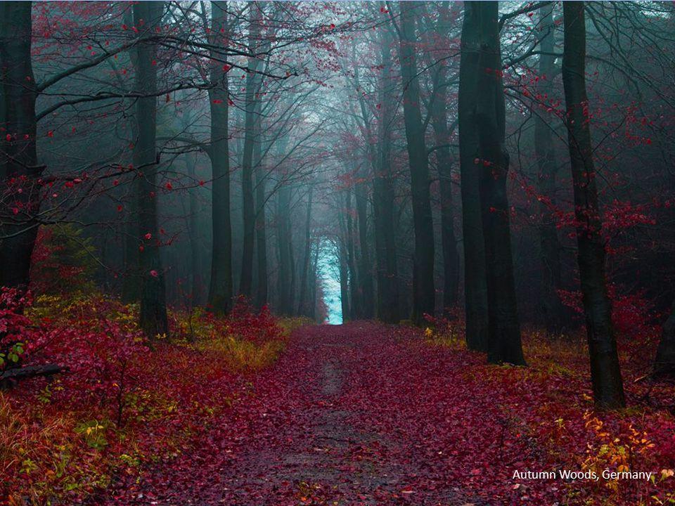 Autumn Woods, Germany