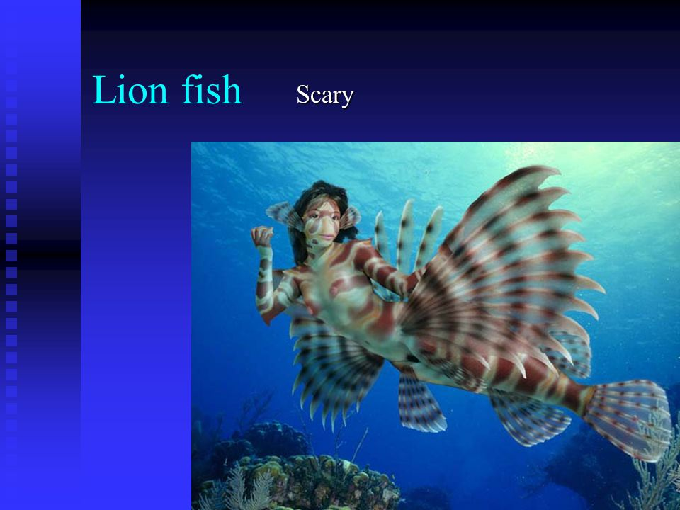 Lion fish Scary