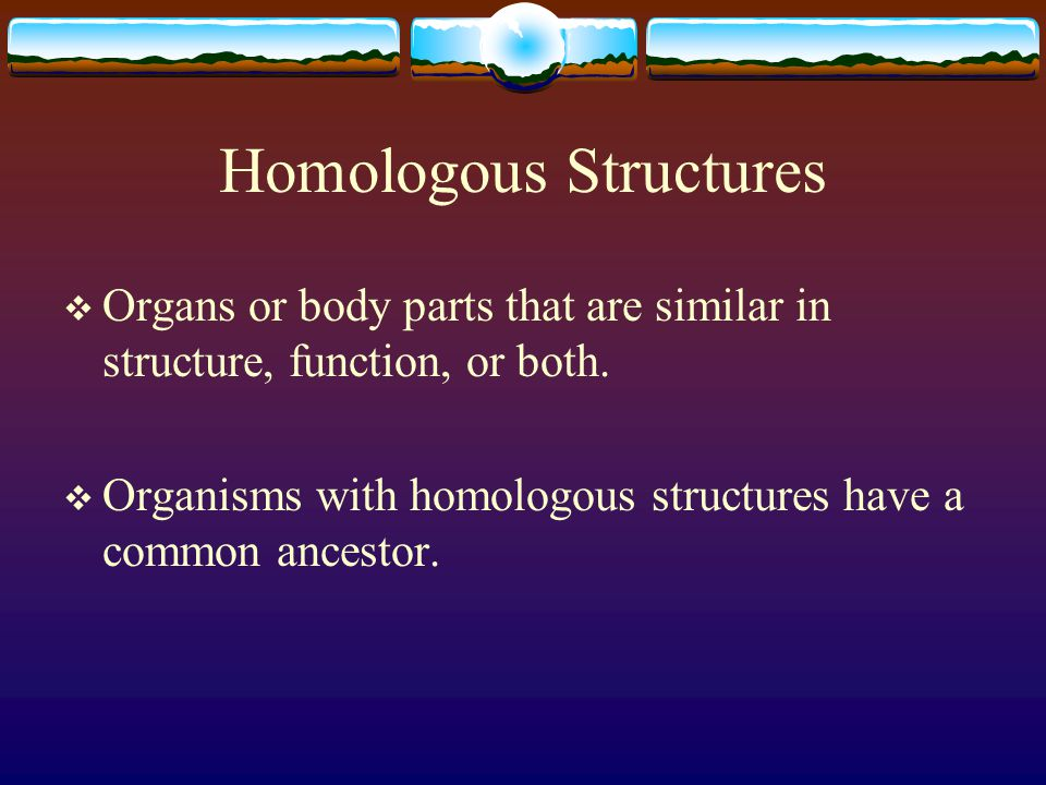 Homologous Structures  Organs or body parts that are similar in structure, function, or both.  Organisms with homologous structures have a common an