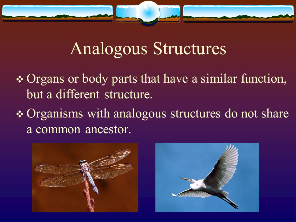 Analogous Structures  Organs or body parts that have a similar function, but a different structure.  Organisms with analogous structures do not shar