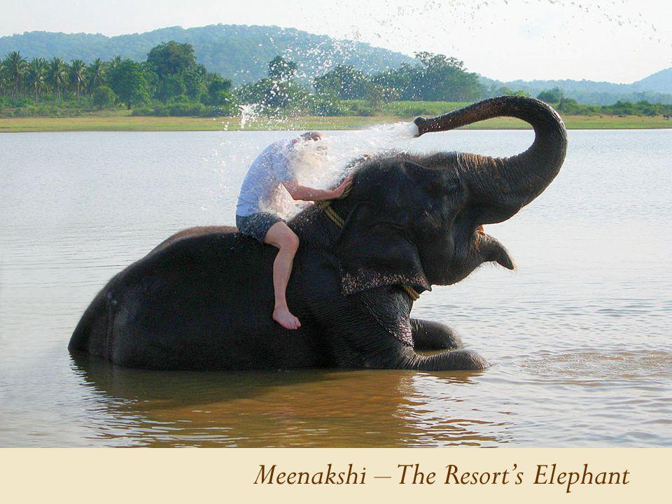 Meenakshi – The Resort's Elephant