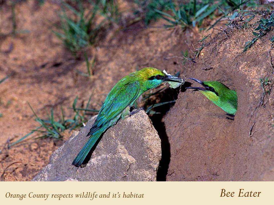Bee Eater Orange County respects wildlife and it's habitat