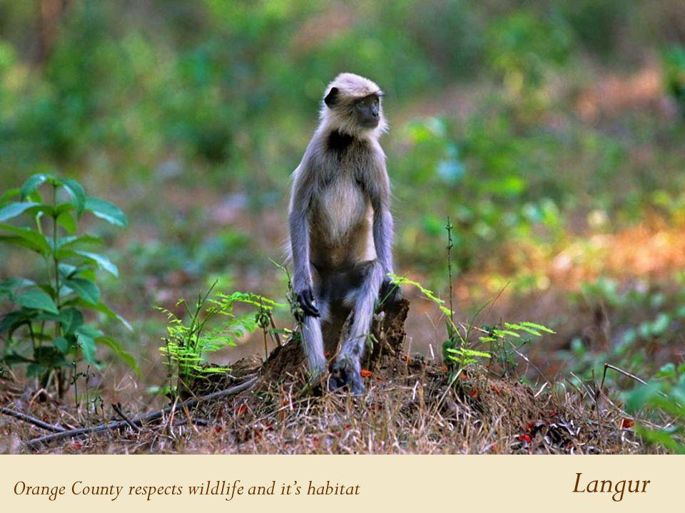 Langur Orange County respects wildlife and it's habitat