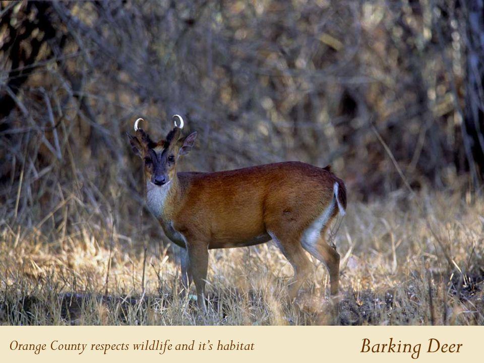 Barking Deer Orange County respects wildlife and it's habitat