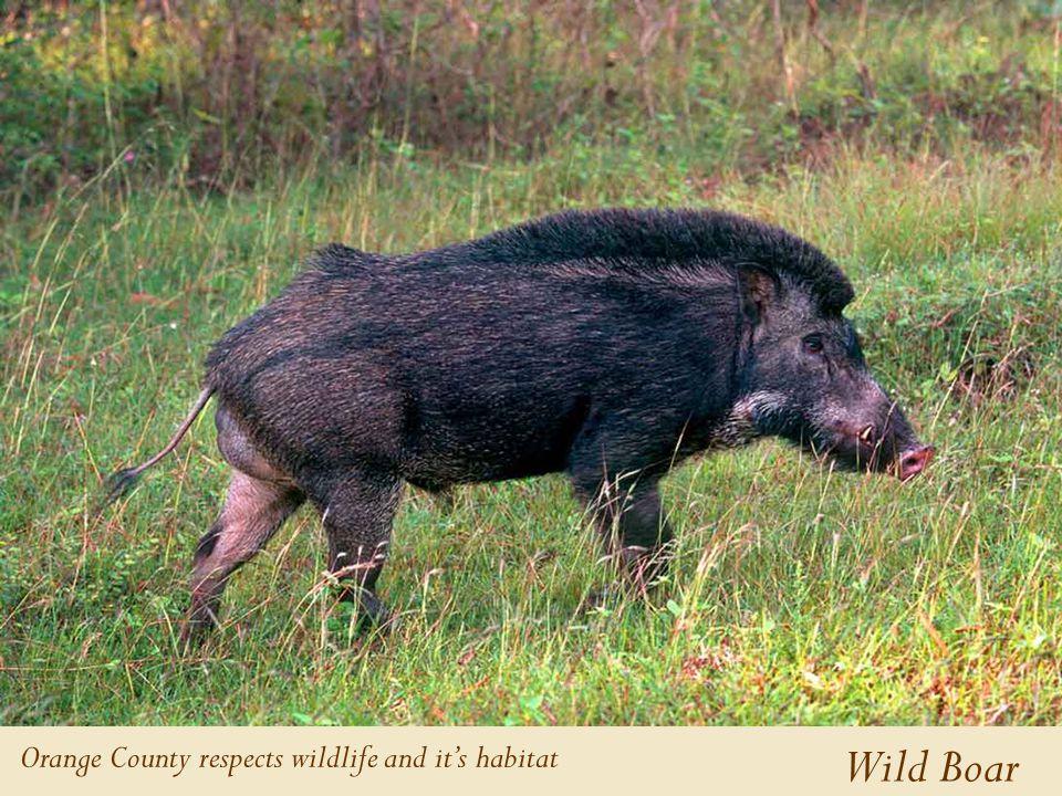 Wild Boar Orange County respects wildlife and it's habitat