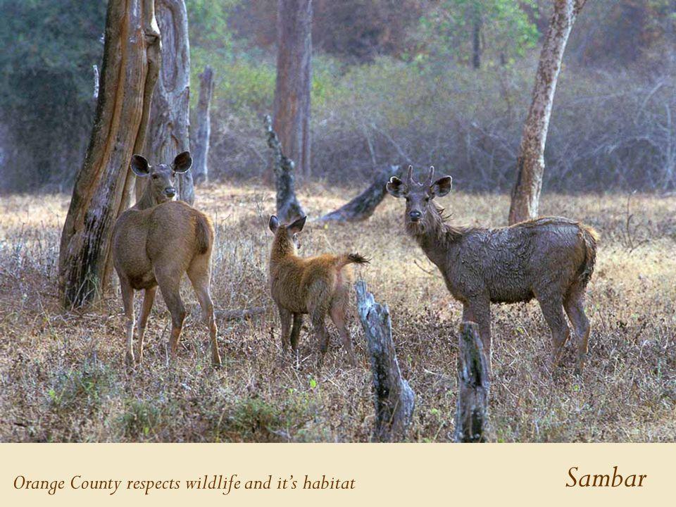 Sambar Orange County respects wildlife and it's habitat