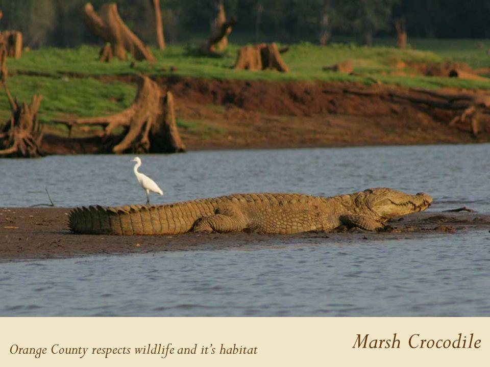 Marsh Crocodile Orange County respects wildlife and it's habitat