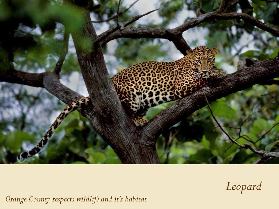 Leopard Orange County respects wildlife and it's habitat