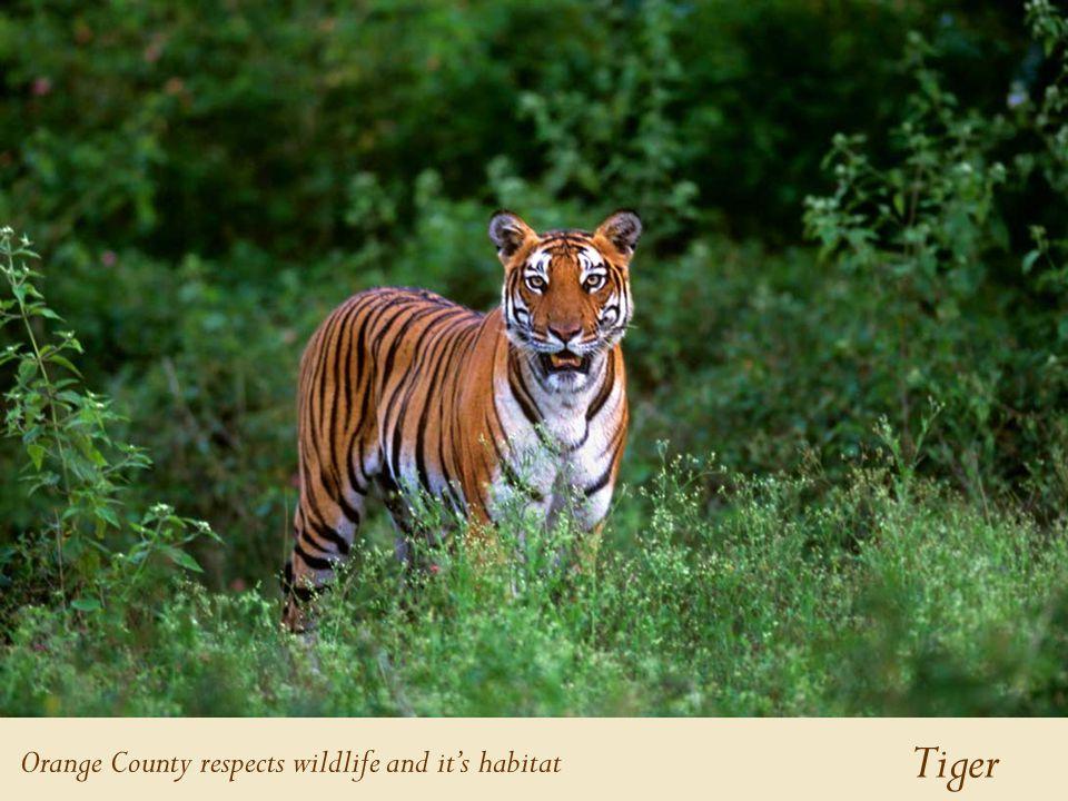 Tiger Orange County respects wildlife and it's habitat