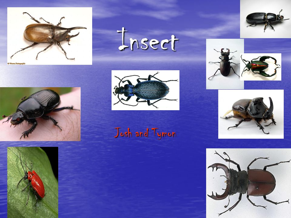 Insect Josh and Tymon