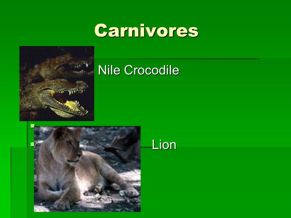 Carnivores Carnivores  Nile Crocodile   Lion