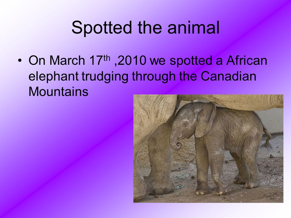 Originally Found The elephant is originally found in African rainforests.