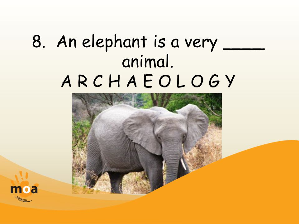 8. An elephant is a very ____ animal. A R C H A E O L O G Y
