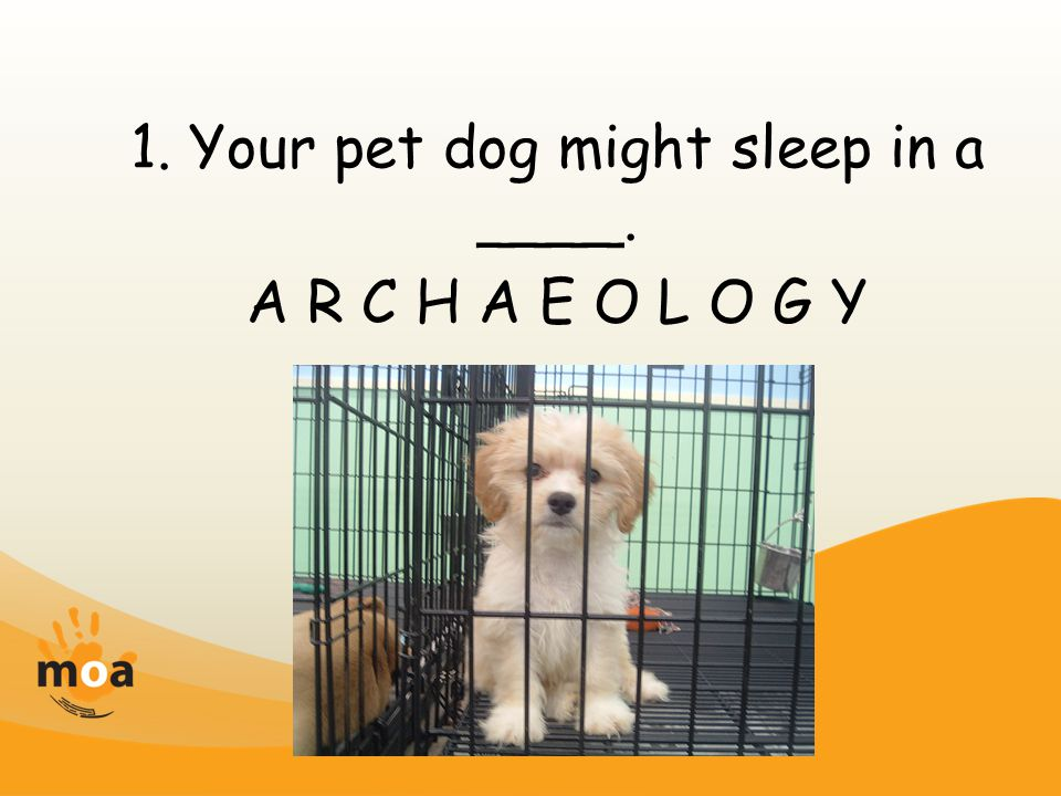 1. Your pet dog might sleep in a ____. A R C H A E O L O G Y
