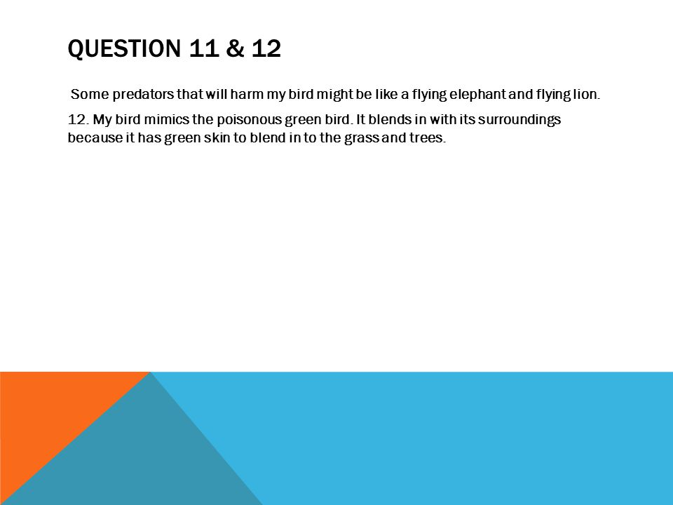 QUESTION 11 & 12 Some predators that will harm my bird might be like a flying elephant and flying lion.