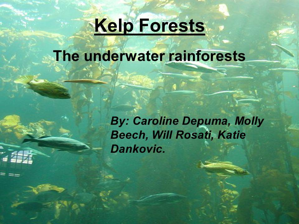Kelp Forests The underwater rainforests By: Caroline Depuma, Molly Beech, Will Rosati, Katie Dankovic.