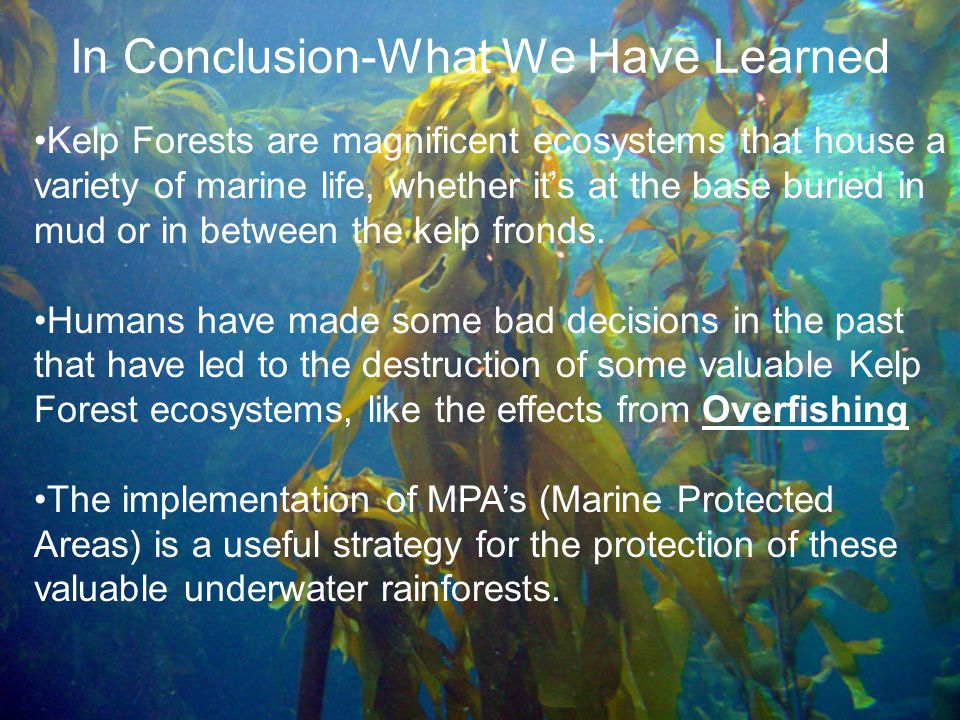 In Conclusion-What We Have Learned Kelp Forests are magnificent ecosystems that house a variety of marine life, whether it's at the base buried in mud or in between the kelp fronds.